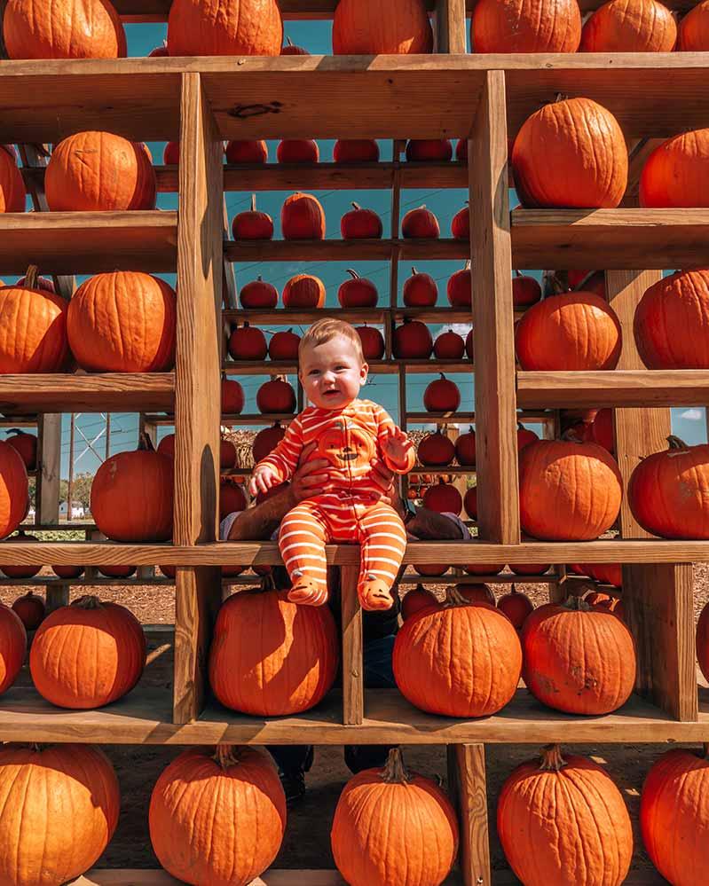 Baby on window of pumpkin house
