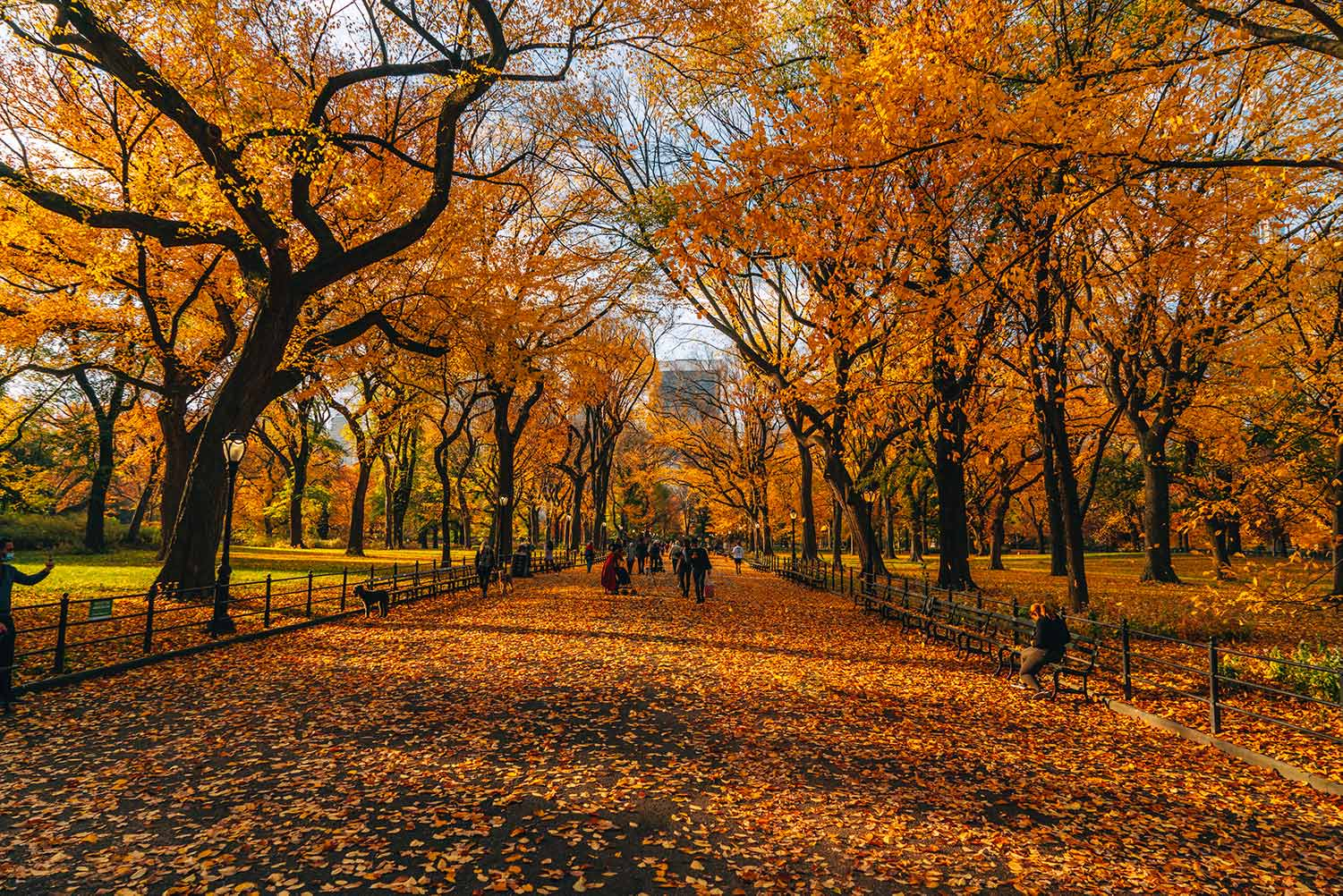 Fall foliage in full effect at The Mall at Central Park in NYC. Photo by Kristi Hemric (Instagram: @khemric).